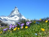 skattesystemet i Schweiz